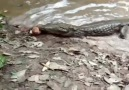 Electric eels can be deadly be careful!
