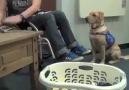 Engelli Sahibine Yardım Eden Köpek