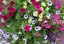 En güzel çiçekler bahçenizde en sevdiğiniz insanlar yanınızda olsun.