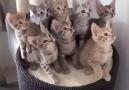 En komik kedi videoları...