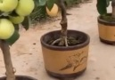 Entertainment Video - Awesome natural gift of fruits Facebook