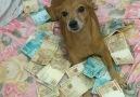 Era o melhor amigo do homem at conhecer o dinheiro.