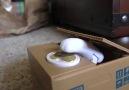 Fareli kumbarayı görüp travma geçiren kedi