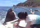 Feeding the sea lions
