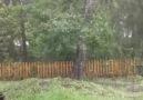 Fırtına ağaca neler yapıyor