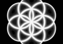 Flower of Life - Seed of life...