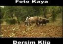 FOTO KAYA'NIN DERSİM KLİBİ
