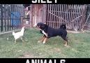 FUNNY ANIMAL FAILS