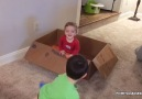 Funny Baby Siblings Fails