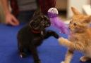 13 Funny Kitten Videos Compilation 2016
