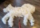 9GAG - Turning dog fur into a real dog Facebook
