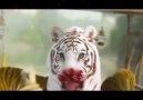 Gerilimde Tavan Yapan Film - King of Mountain