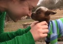 Goats know how to make the most of every day !