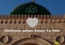 Gönlümün sultan-i sensin ya nebi..