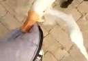 Good dog! The black dog stops a white goose from biting a boy,...
