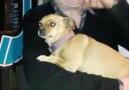 Görebileceğiniz en utangaç köpek ile tanışın
