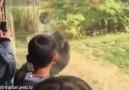 Gorillerin kavgası- -Gorillerin kavgası