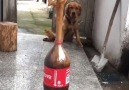 Graziatto - Amazing magic tricks you can do with Coca-Cola &lt3 Facebook