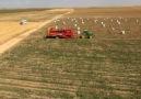 GRİMME - Artıklar Tarım / SV-260 Patates Hasat Makinesi