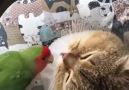 Groupe public BiPati - Hayvansever Topluluğu Facebook