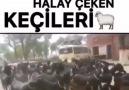 Groupe public Garfield Türkiye&Beğenen Arkadaşlar Facebook