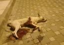 Groupe public İzmir ücretsiz evcil hayvan sahiplendirme Facebook