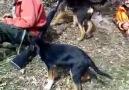 Groupe public Ktahya Dumlupınar Tavşan Domuz avcıları Facebook