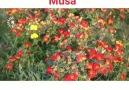 Grup Avesta - AVESTA-HESEN MALA MUSA