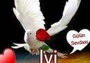 Gülün Sevdası - Hayırlı akşamlar Facebook