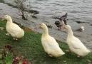 Günaydın Huzur dolu bir hafta dileğiyle &(Sapanca Gölü )