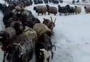 Güzel köyümüzden güzel kış manzarası