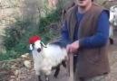 Güzel sesiyle yüreklere dokunan çoban kardeşimiz