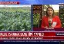 Habertürk - Habertürk Türkiye&ıspanak deposu Beypazarı& Facebook