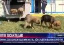 Haber Türk Tv 01032019 Onlar şimdi sıcak birer yuva arıyor!