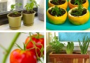 Hacks to reduce food waste start your own kitchen gardenFULL INSTRUCTIONS