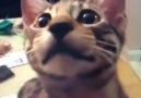 Hain Kedi
