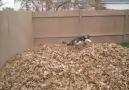 Happy Doggie Happy Life - Please SHARE