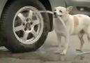 Harika köpek !