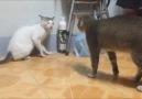 hasta kediler