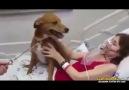 Hastalığına Karşı Savaşı Kaybeden Kadının Köpeğiyle Son Buluşması