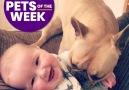 Have a big slice of the Best Pets Of The Week!!