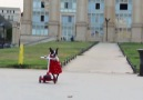 Have you ever seen a dog ride a scooter