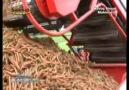 Havuç hasat makinaları