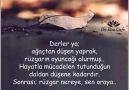 HAYATA DAİR-3