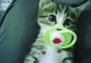 Hayatın İçinden - Almayın kediciğin emziğini