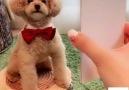 Hayvanlar alemi - Hem tatlı hem akıllı