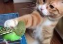 Hayvanlar Alemi - Kuşu seven kedi Facebook