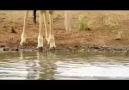 Hayvanlar Aleminde Pazar Günleri Nasıl Gecer :)