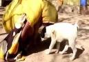 Hayvanlara Merhamet Etmeyen İnsanlara da Merhamet Göstermez!