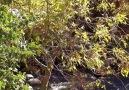 Heci Gûzereşi - Payîzok